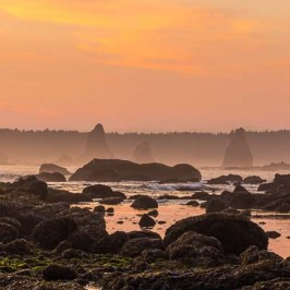 Rainforest and Rockstacks: Oil City to Third Beach